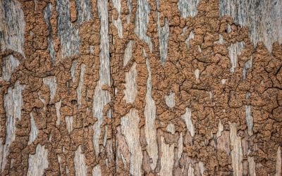 4 Signs of Termites